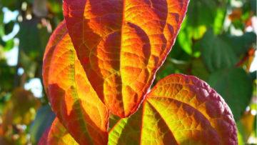 Heiby automne Wissembourg Haguenau Soultz sous forets - aménagements extérieurs pavage enrobé plantation paysagiste terrasse palissade