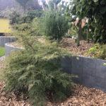 Heiby Wissembourg Haguenau Soultz sous forets - aménagements extérieurs pavage enrobé plantation paysagiste terrasse palissade